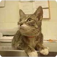 Adopt A Pet :: Juliet - Arlington, VA