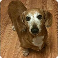 Adopt A Pet :: Dasher - San Jose, CA