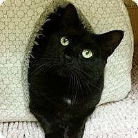 Adopt A Pet :: Beauty - East Meadow, NY