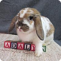 Adopt A Pet :: Adalyn - Newport, DE