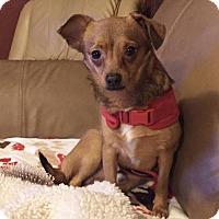 Adopt A Pet :: Bastian RH CP - Providence, RI