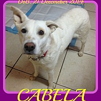 Labrador Retriever/Australian Cattle Dog Mix Puppy for adoption in New Brunswick, New Brunswick - CABELA