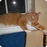 Adopt A Pet :: Bingo - Arlington, VA