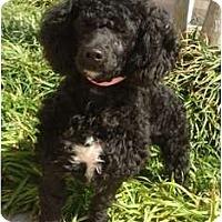Adopt A Pet :: Jazzie - Sugarland, TX