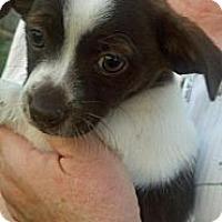 Adopt A Pet :: Russett - Bakersfield, CA