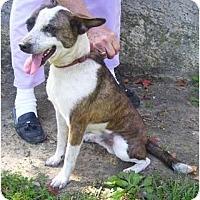 Adopt A Pet :: Rudy - Allentown, PA