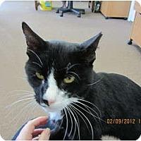 Adopt A Pet :: Charlie - Bunnell, FL
