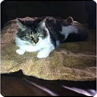 Adopt A Pet :: *Daisy - Winder, GA
