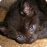 Adopt A Pet :: Eddie - Xenia, OH