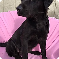 Adopt A Pet :: Char - Phoenix, AZ