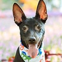 Adopt A Pet :: Marti - San Francisco, CA