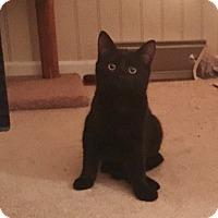 Adopt A Pet :: Lilith - Colmar, PA