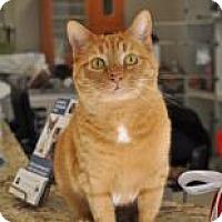 Adopt A Pet :: Cranberry - Suwanee, GA