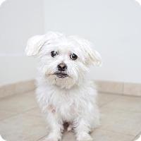 Adopt A Pet :: Bear D170350 - Eden Prairie, MN