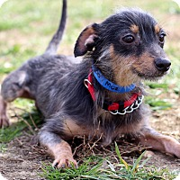 Adopt A Pet :: Moe - Waldorf, MD