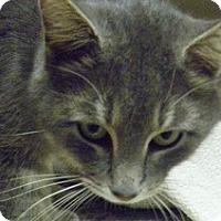 Adopt A Pet :: Fuzz Aldren - Hamburg, NY