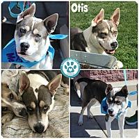 Adopt A Pet :: Otis - Kimberton, PA