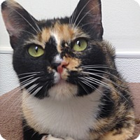 Adopt A Pet :: Patches - Houston, TX