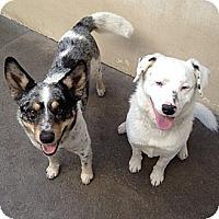 Adopt A Pet :: Lucky & Patches - Scottsdale, AZ