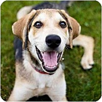 Adopt A Pet :: Damon - Indianapolis, IN