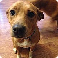 Adopt A Pet :: Hallie - Hagerstown, MD