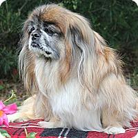 Adopt A Pet :: Bingo - Richmond, VA