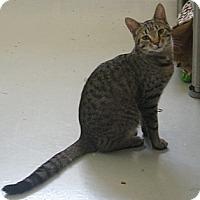 Adopt A Pet :: Web - Manning, SC