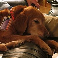 Adopt A Pet :: Lola - Denver, CO