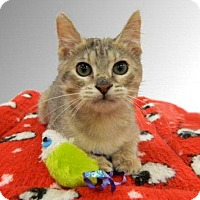 Adopt A Pet :: Lorelei - The Colony, TX