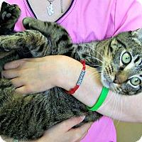 Adopt A Pet :: Aslan - Toledo, OH