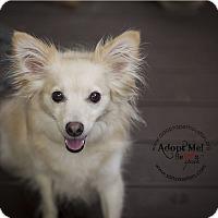 Adopt A Pet :: Bella and Foxxy - Houston, TX