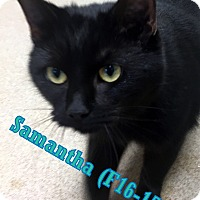Adopt A Pet :: Samantha - Tiffin, OH