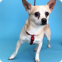 Adopt A Pet :: Paco - Monroe, MI