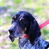 Adopt A Pet :: Raleigh (Needs foster) - Washington, DC