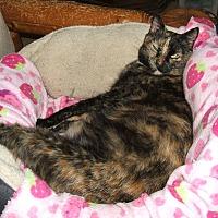 Adopt A Pet :: Emma Jean - Acworth, GA