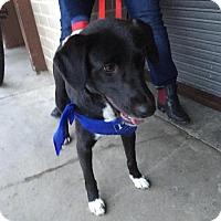 Adopt A Pet :: Sasha - Potomac, MD