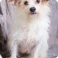 Adopt A Pet :: KATIE - Anna, IL