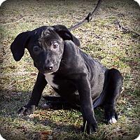 Adopt A Pet :: Oregano - Milford, NJ