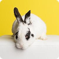 Adopt A Pet :: Prince Charming of Easterland - Ogden, UT