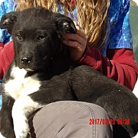 Adopt A Pet :: Forest (15 lb) *New Pics/Video - Williamsport, MD