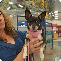 Adopt A Pet :: Amy - Lodi, CA