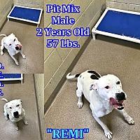 Adopt A Pet :: 1-7 Remi - Triadelphia, WV