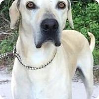 Adopt A Pet :: Aiden - Gainesville, FL