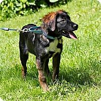 Adopt A Pet :: Ben - Hastings, NY