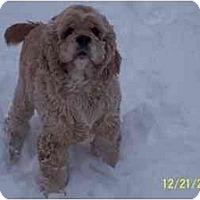 Adopt A Pet :: Mugsy - Tacoma, WA