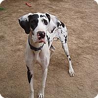 Adopt A Pet :: Marlo - Phoenix, AZ