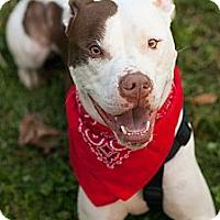 Adopt A Pet :: Daniel - Reisterstown, MD