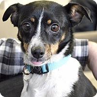 Adopt A Pet :: CJ - Knoxville, TN