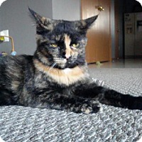 Adopt A Pet :: Mary Lincoln - Canal Winchester, OH