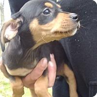 Adopt A Pet :: Dexter - Kendall, NY
